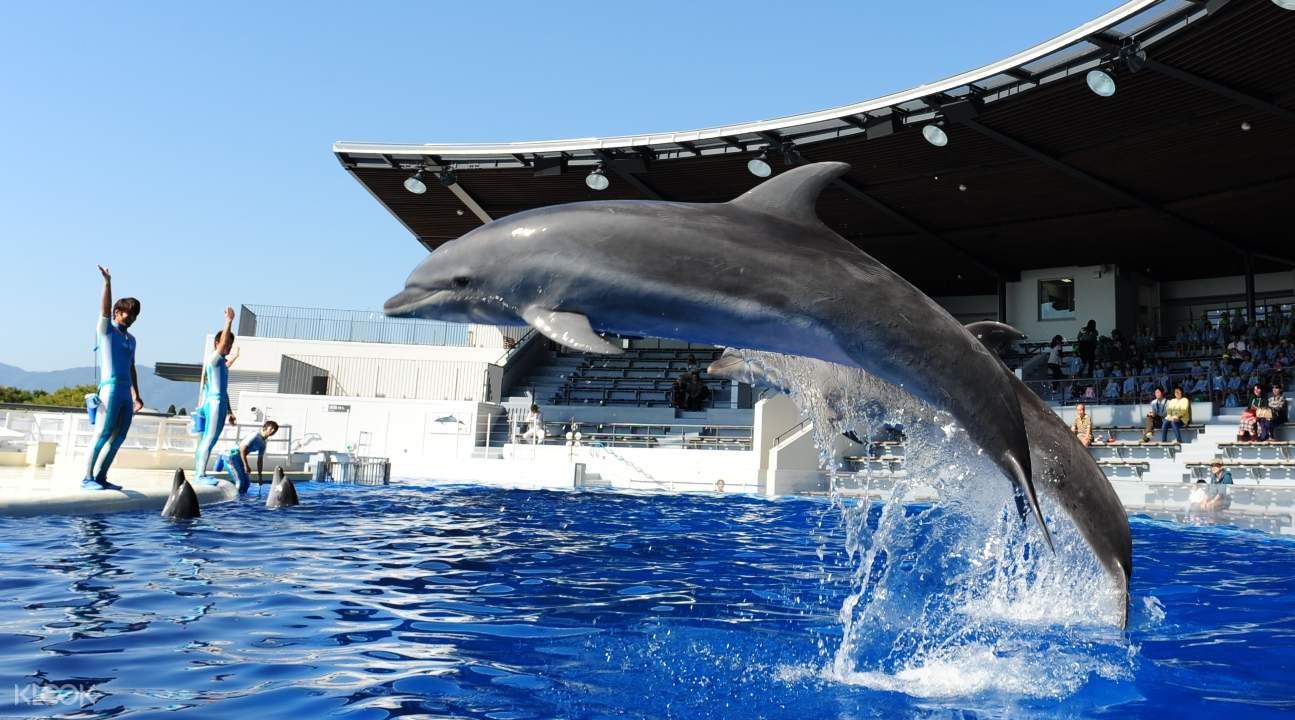 kyoto aquarium, kyoto aquarium ticket, discounted kyoto aquarium ticket, best aquariums in japan, kyoto aquarium ticket special offer